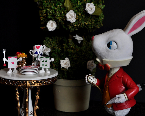 white rabbit photo