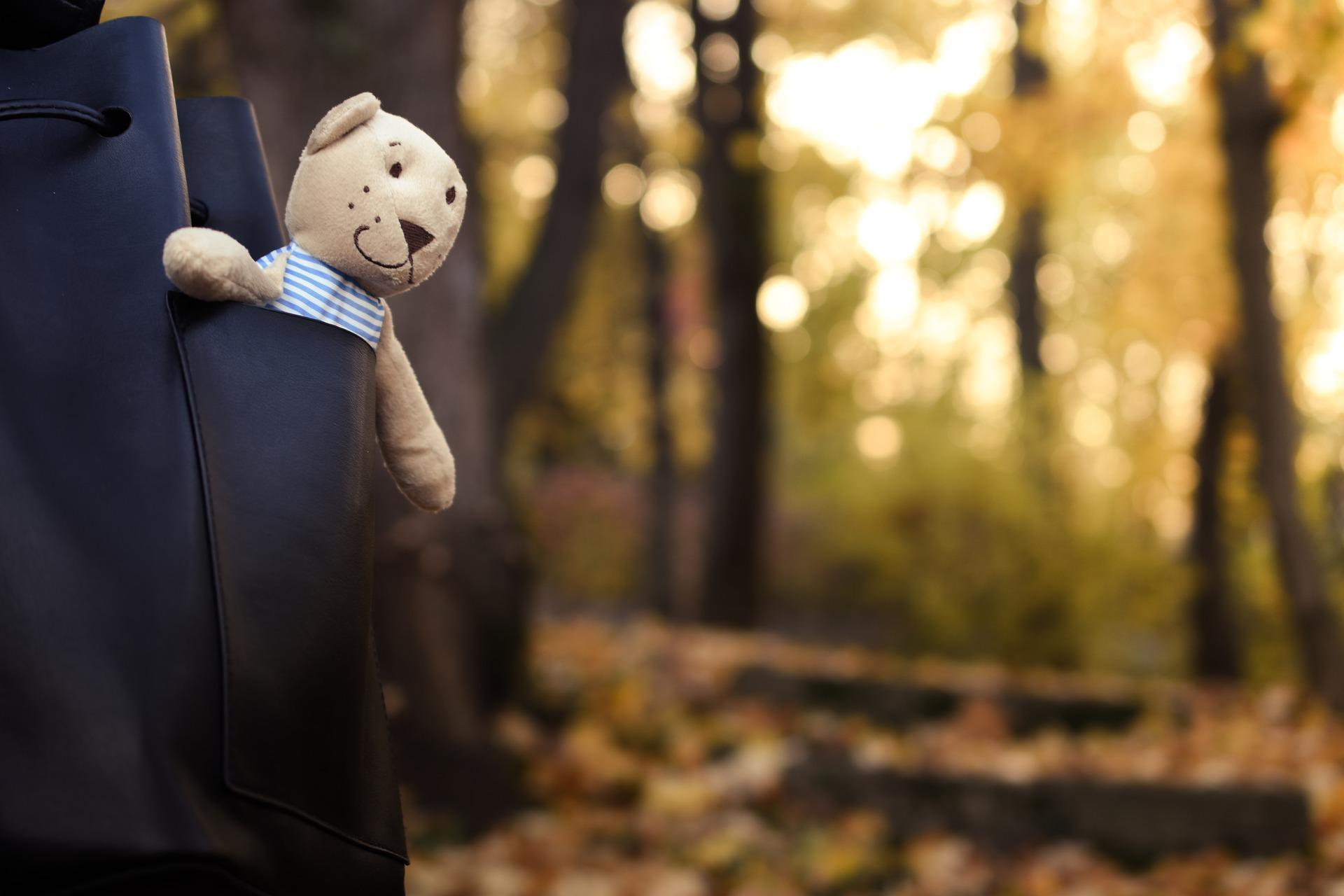 bear-1802370_1920