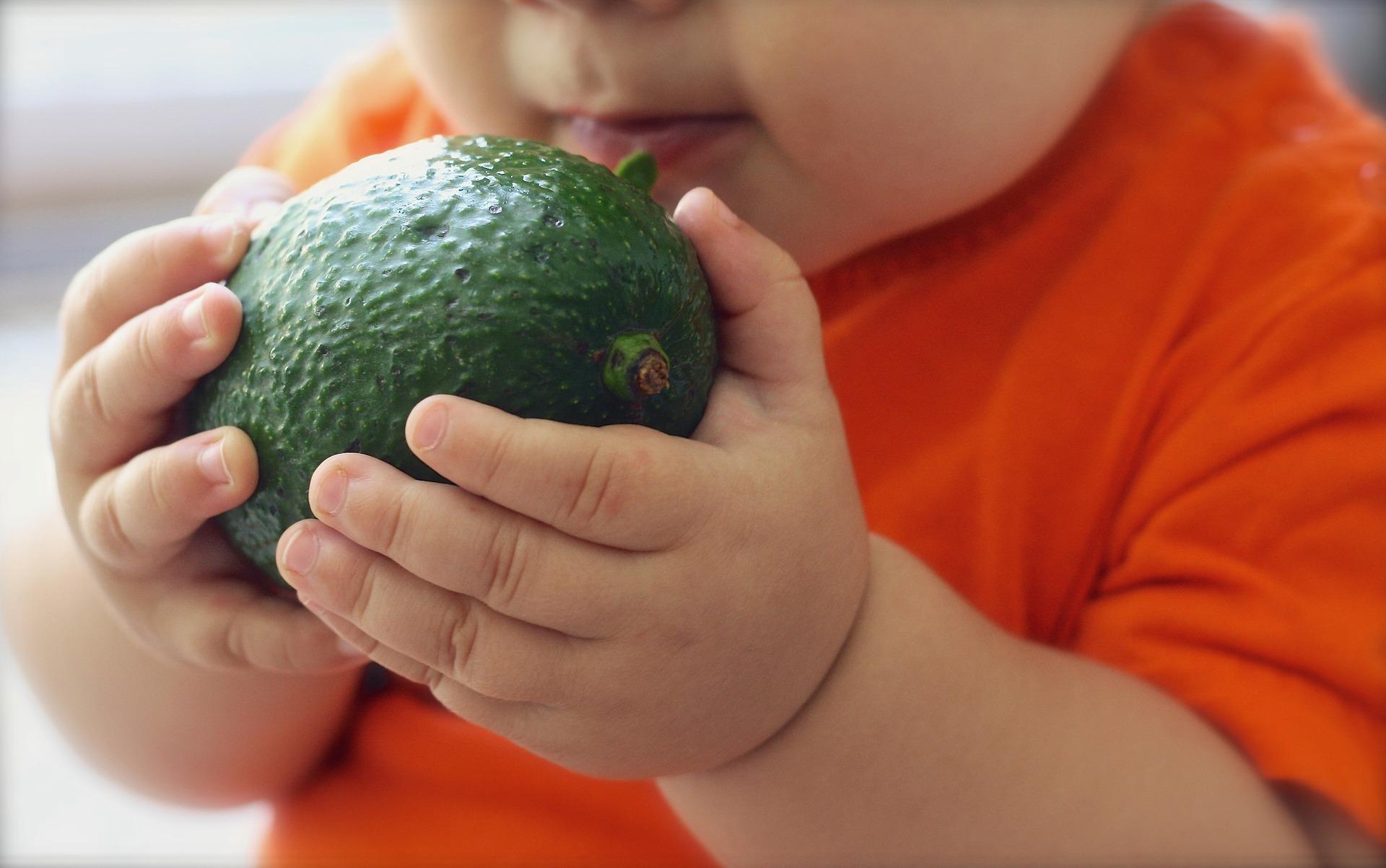 avocado-1476493_1920 (1)