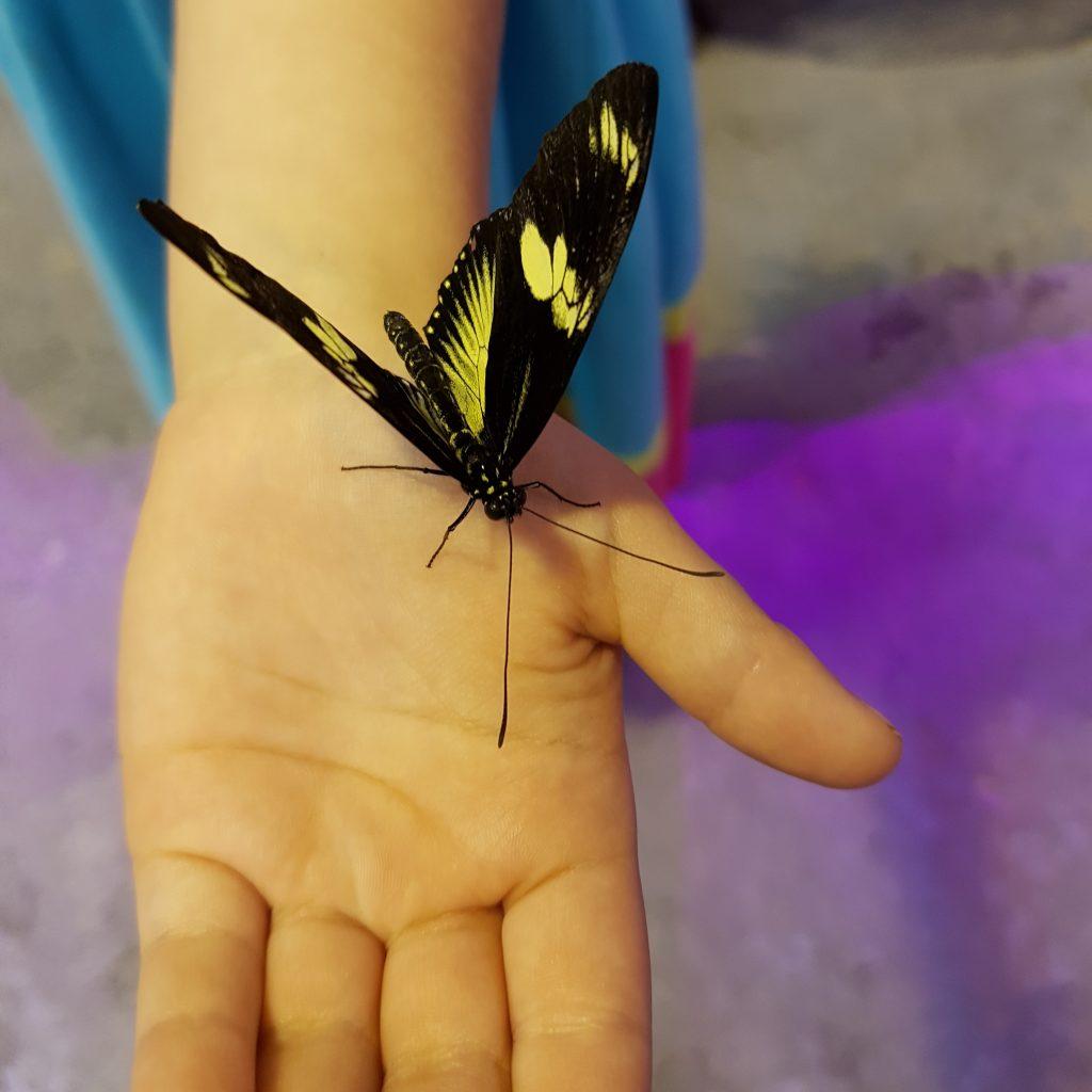 J'ai eu au moins 10 papillons (euh... 5!) sur moi! C'est à cause de ma robe couleur popsicle, parce que les papillons aiment les couleurs (et peut-être les popsicles?)!